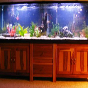 New Aquarium Stand