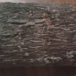 Can you name this wood?  Bark