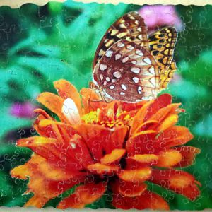 Two butterflies and an orange flower