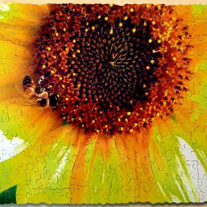 Bee and a sunflower